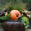 Meseszép őszi filléres dekorációk