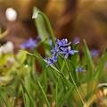 Bámulatos virágzás a Dobogó-erdőben