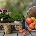 A kosarak őszi hangulatot hoznak az otthonunkba