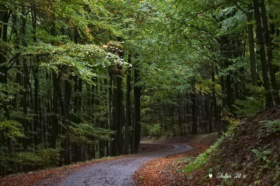 Meseszép ősszel a Kőszegi-hegység