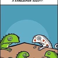 Kaméleon póker