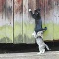 Állati segítség