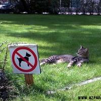 Macskák földje