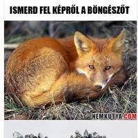 Nemkutya.com - Túlságosan hülyék...