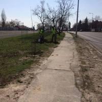 A Kétfarkú Kutyapárt fákat ültetett Szentendrén, kihúzgálta őket az önkormányzat, de még nincs vége