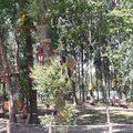Közpénzből építettek kalandparkot az önkormányzati fontos ember lányának Baján