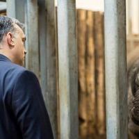 Brusselis irritati, avagy miért éppen egy orrszarvút fogadott örökbe Orbán Viktor?