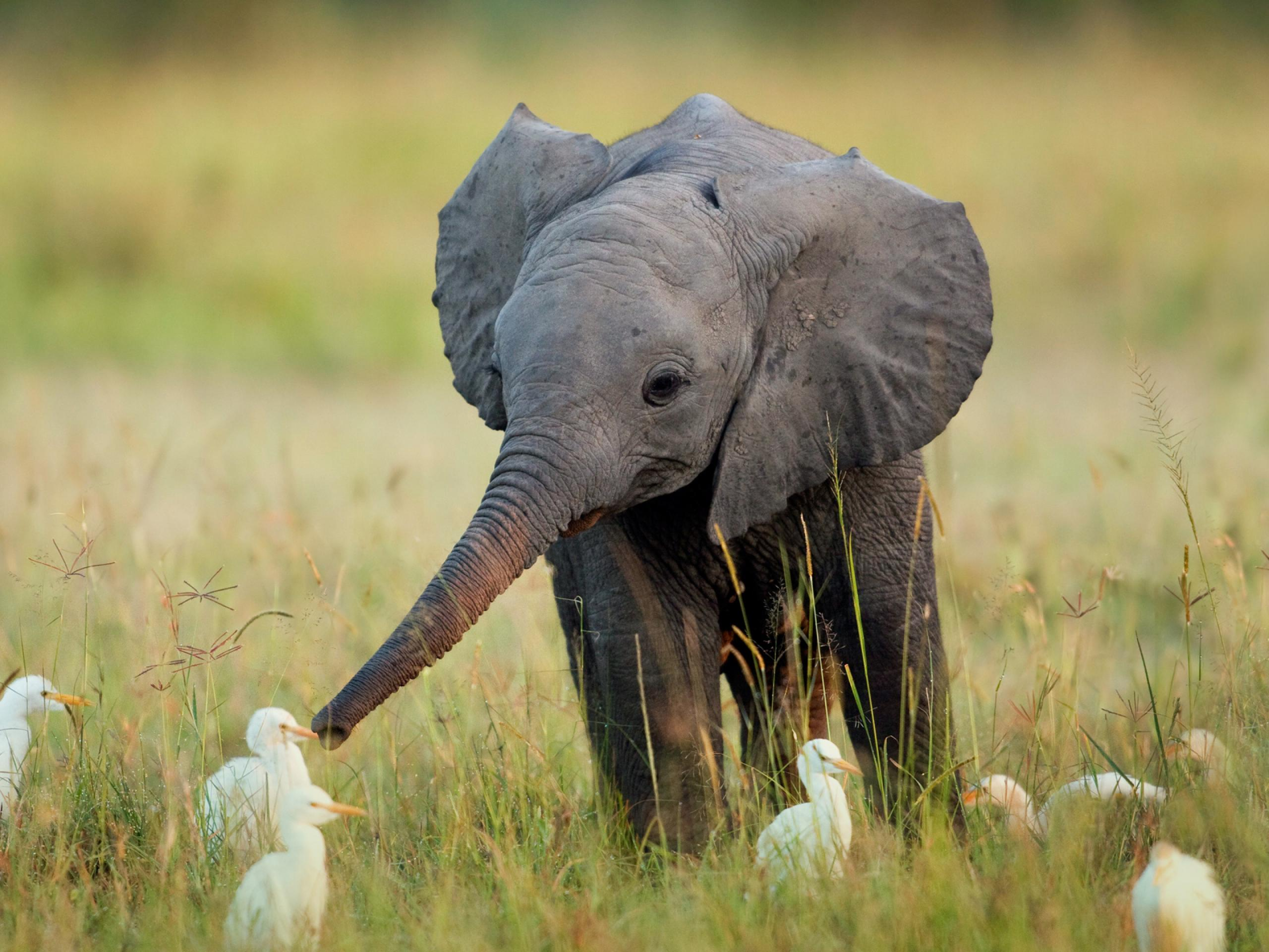 cute-baby-elephant-wallpaper-4.jpg