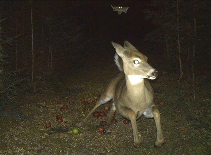 funny-trail-cam-photos-secret-animal-life-102-59d23527cc949_700.jpg