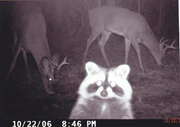 funny-trail-cam-photos-secret-animal-life-106-59d239aacb460_700.jpg