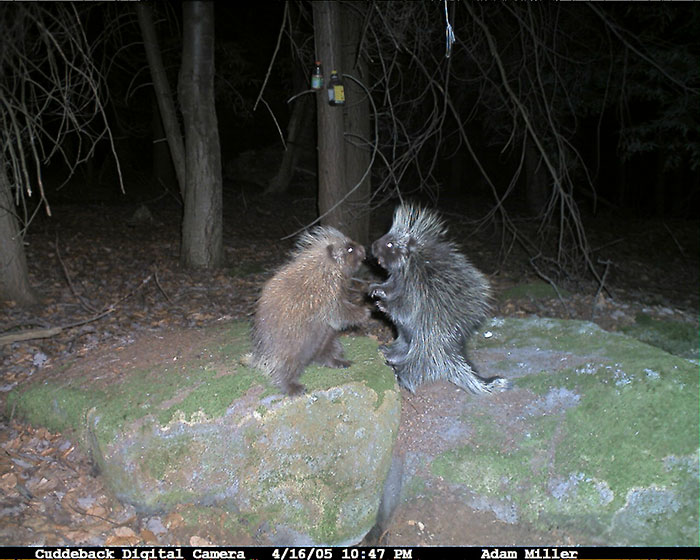 funny-trail-cam-photos-secret-animal-life-107-59d23ab617d82_700.jpg