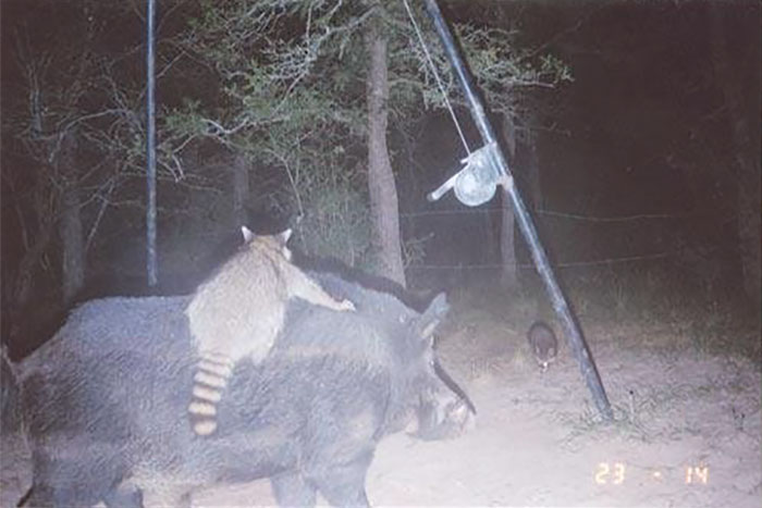 funny-trail-cam-photos-secret-animal-life-110-59d23fce4f0ea_700.jpg