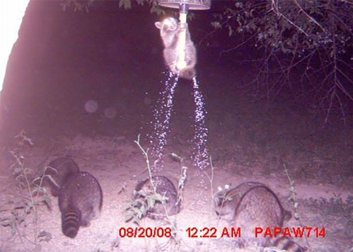 funny-trail-cam-photos-secret-animal-life-128-59d34b76c039e_700.jpg
