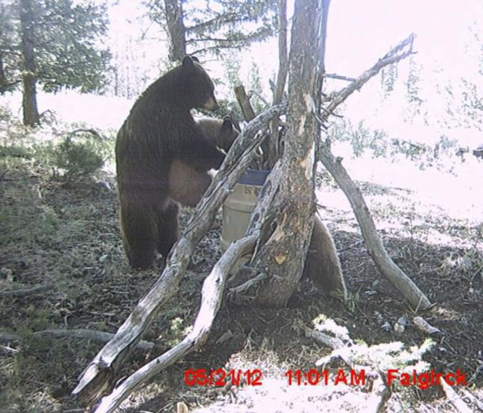 funny-trail-cam-photos-secret-animal-life-161-59d37fcf8e7ff_700.jpg