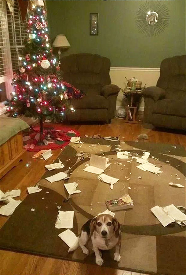 xx-animals-destroying-christmas-10_605_1.jpg