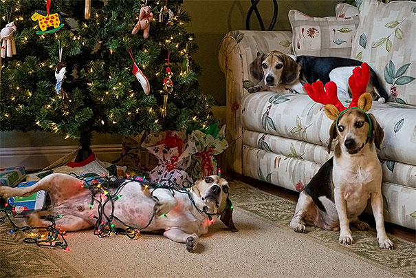 xx-animals-destroying-christmas-13_605.jpg