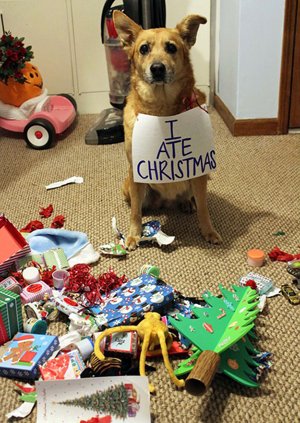 xx-animals-destroying-christmas-3_605.jpg