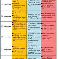 A baba fejlődési szakaszai (19-24 hónapos korig)