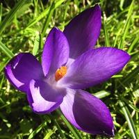 Tavaszi hozzátáplálás