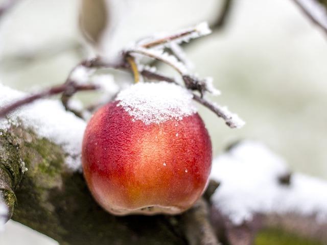 Téli hozzátáplálás