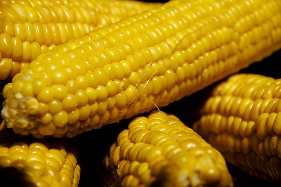 corn-3555294_960_720.jpg