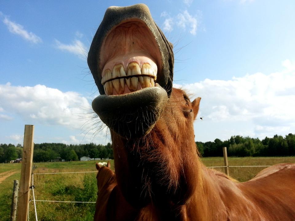 horse-1018835_960_720.jpg