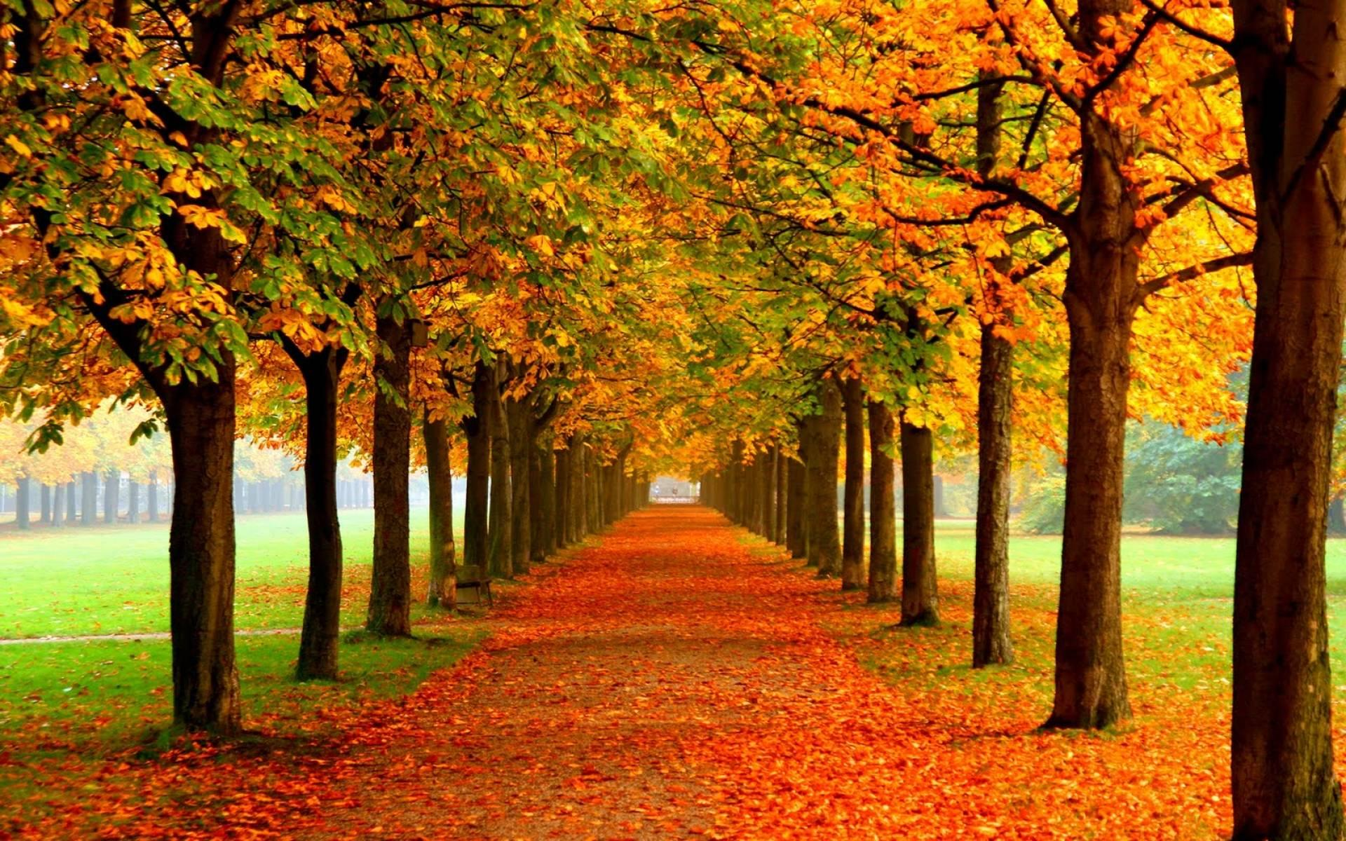 authum-leaf-widescreen-wallpaper-nice-background-f.jpg