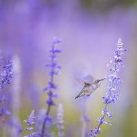 A zaccos csaj és a madaras ember