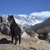 5. nap Deboche (3770 m) - Dingboche (4350 m)