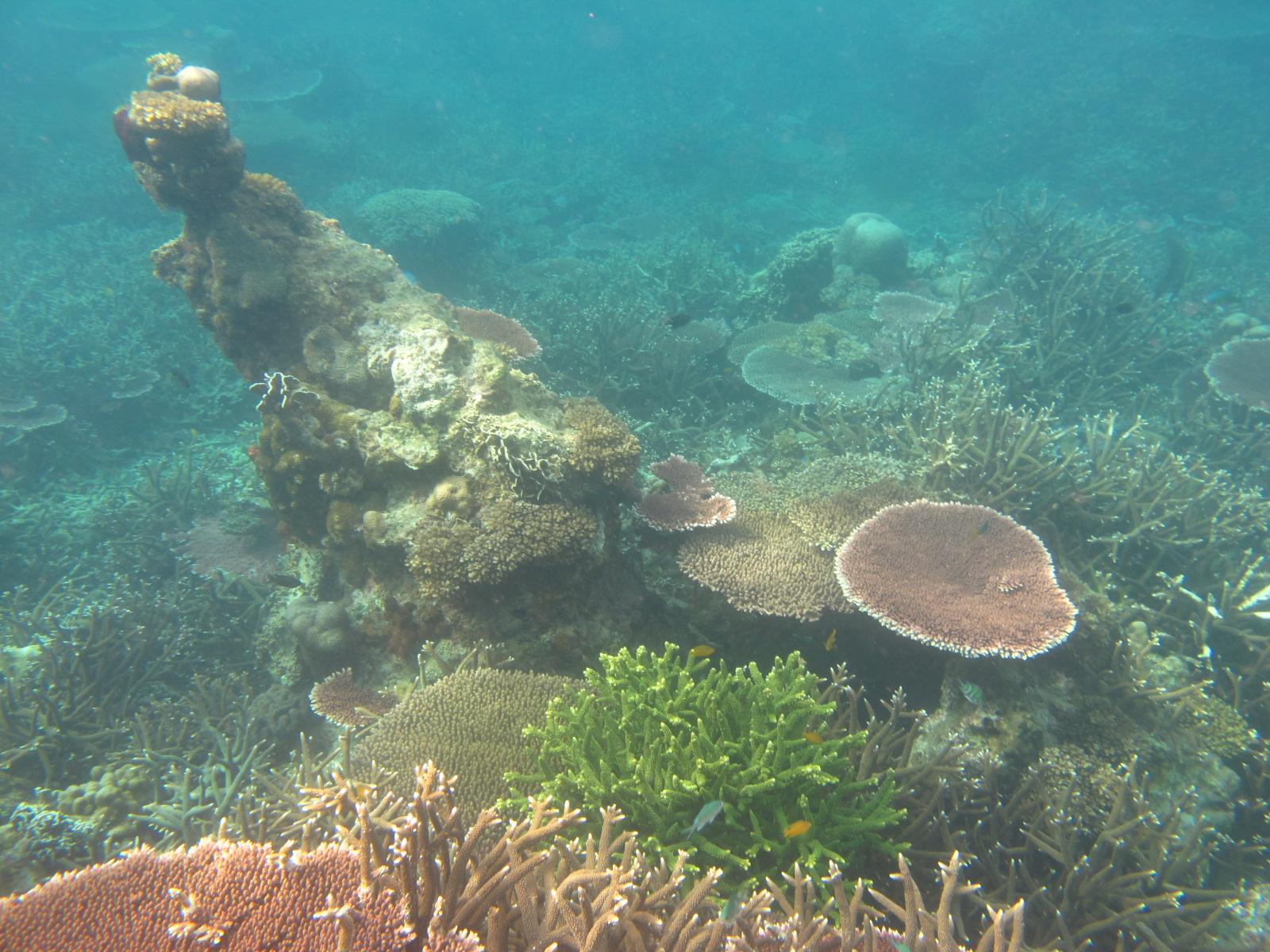korallok.JPG