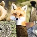 Útravaló 3: Találkozhatunk-e veszélyes állatokkal az erdőket járva?
