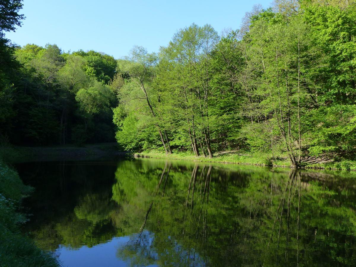 A szélmentes Apát-kúti-völgyben tükörként veri vissza duzzasztott tavacska a partján álló fák képét