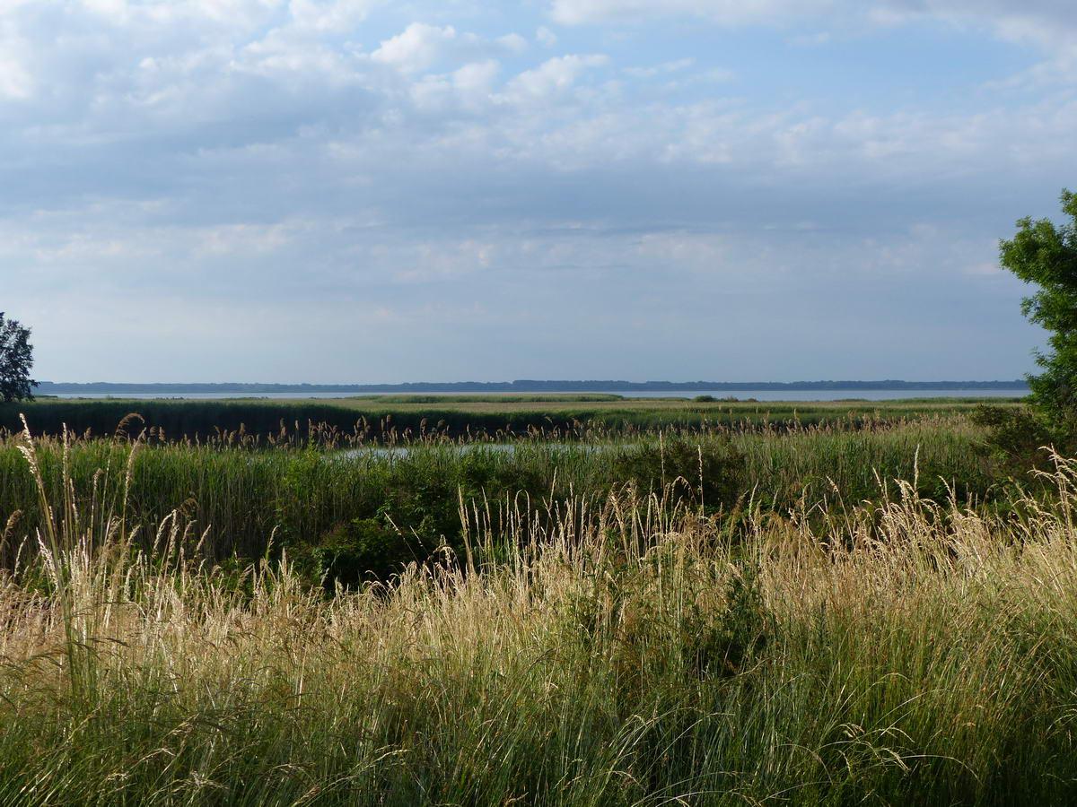 Széles kitekintés a Tisza-tóra a vízparti fasor egy foghíján keresztül