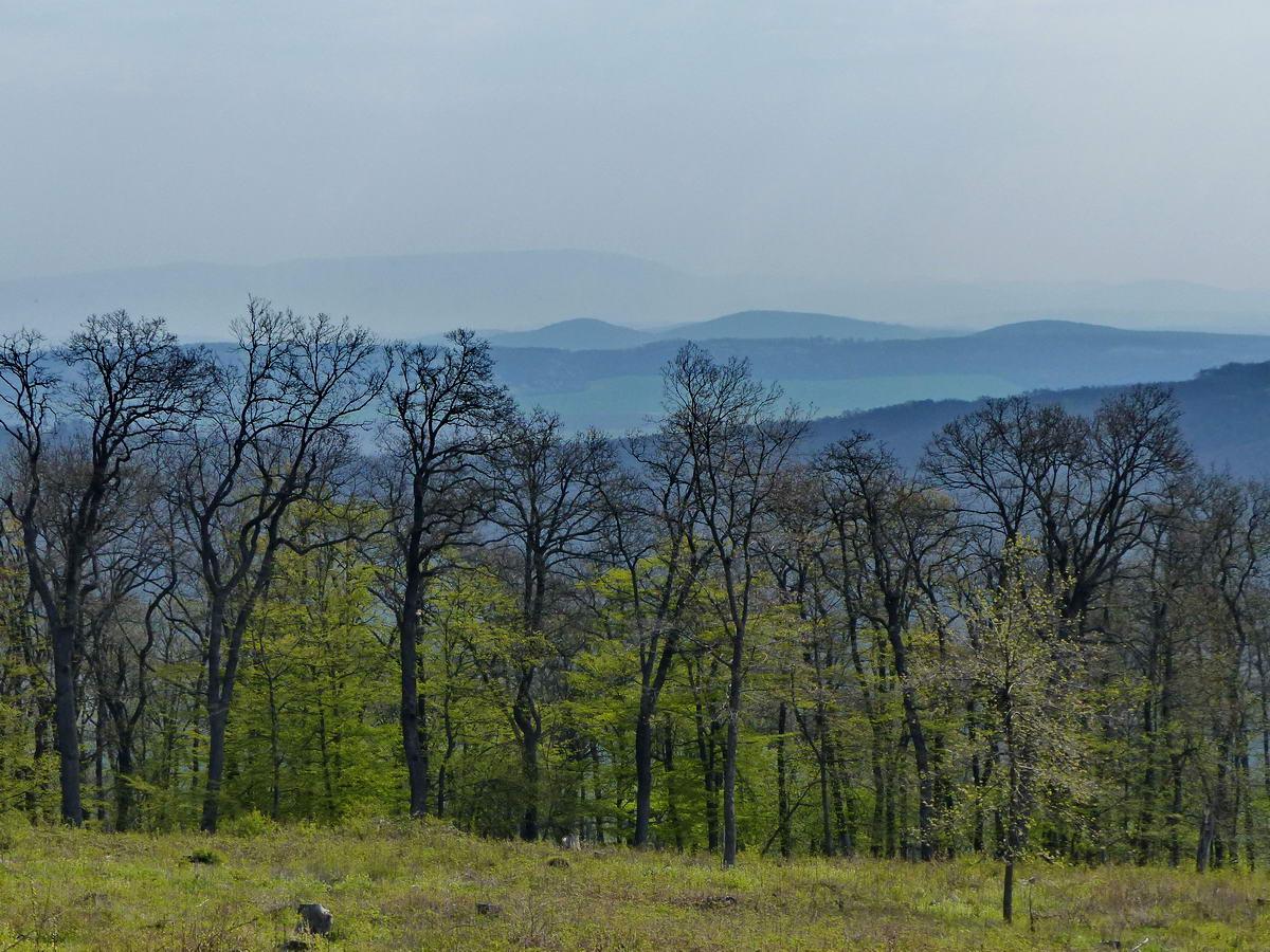 Kilátás egy irtásfolton keresztül a Gerecse dombsoraira