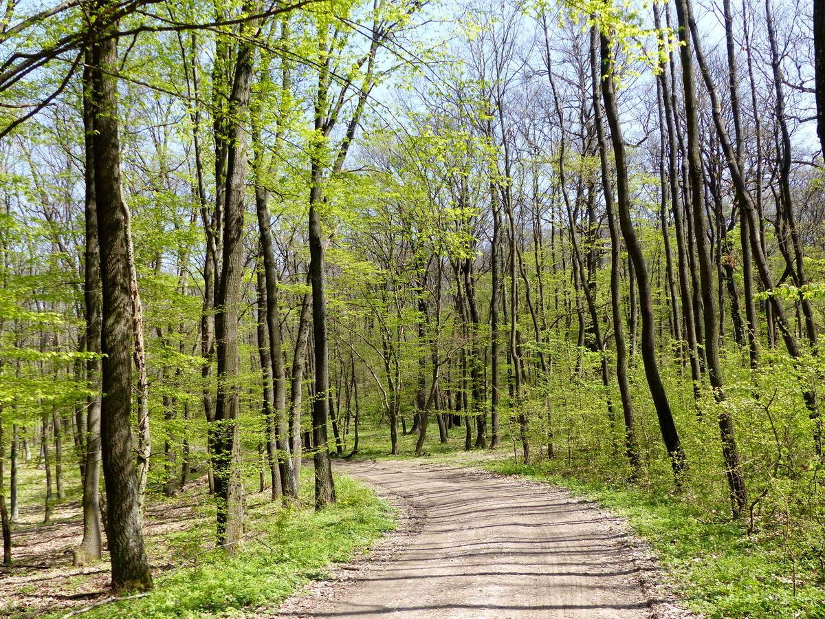 Murvás erdőgazdasági úton a Pes-kő lábainál