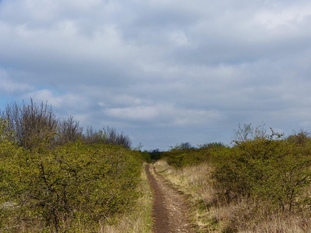 Kitaposott ösvényen a bozótoson keresztül
