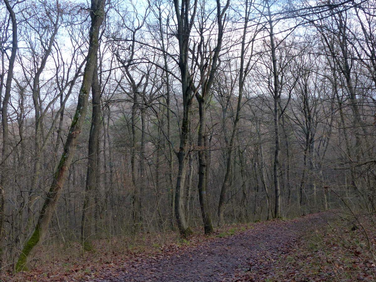 Már látszik a kopasz fák között a János-hegy