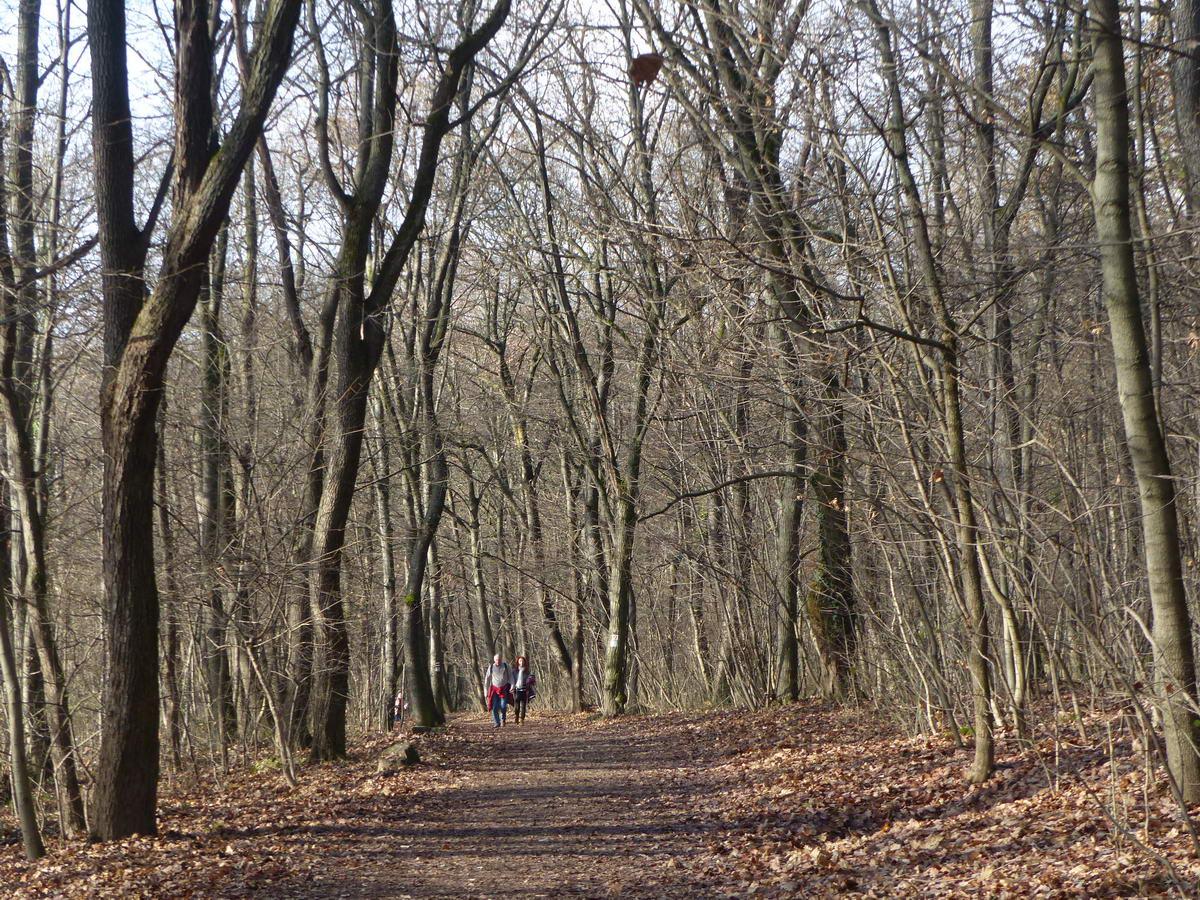 A Hárshegyi körút sétánya