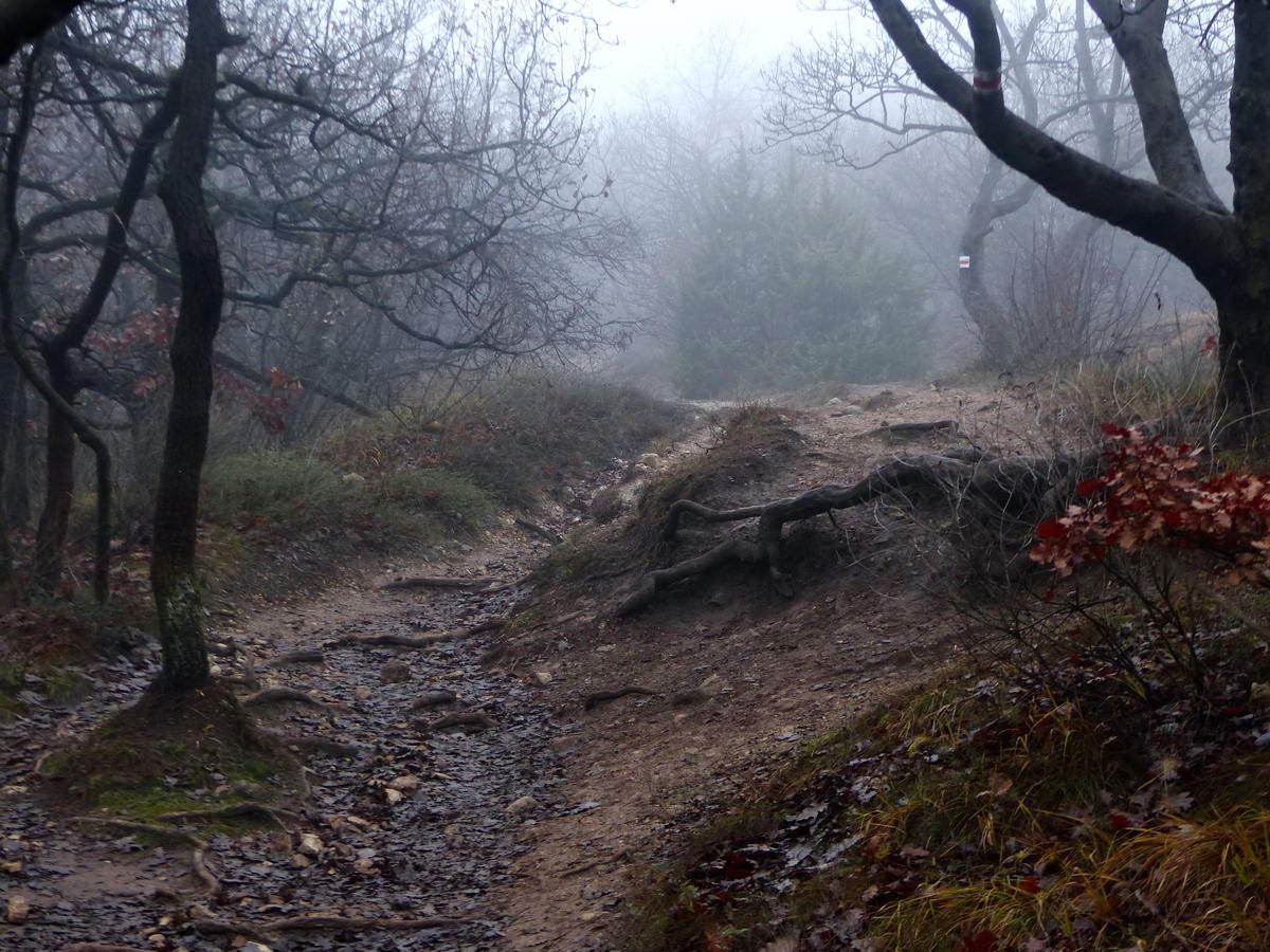 Ködös ösvényen a Nagy-szénás csúcsa felé