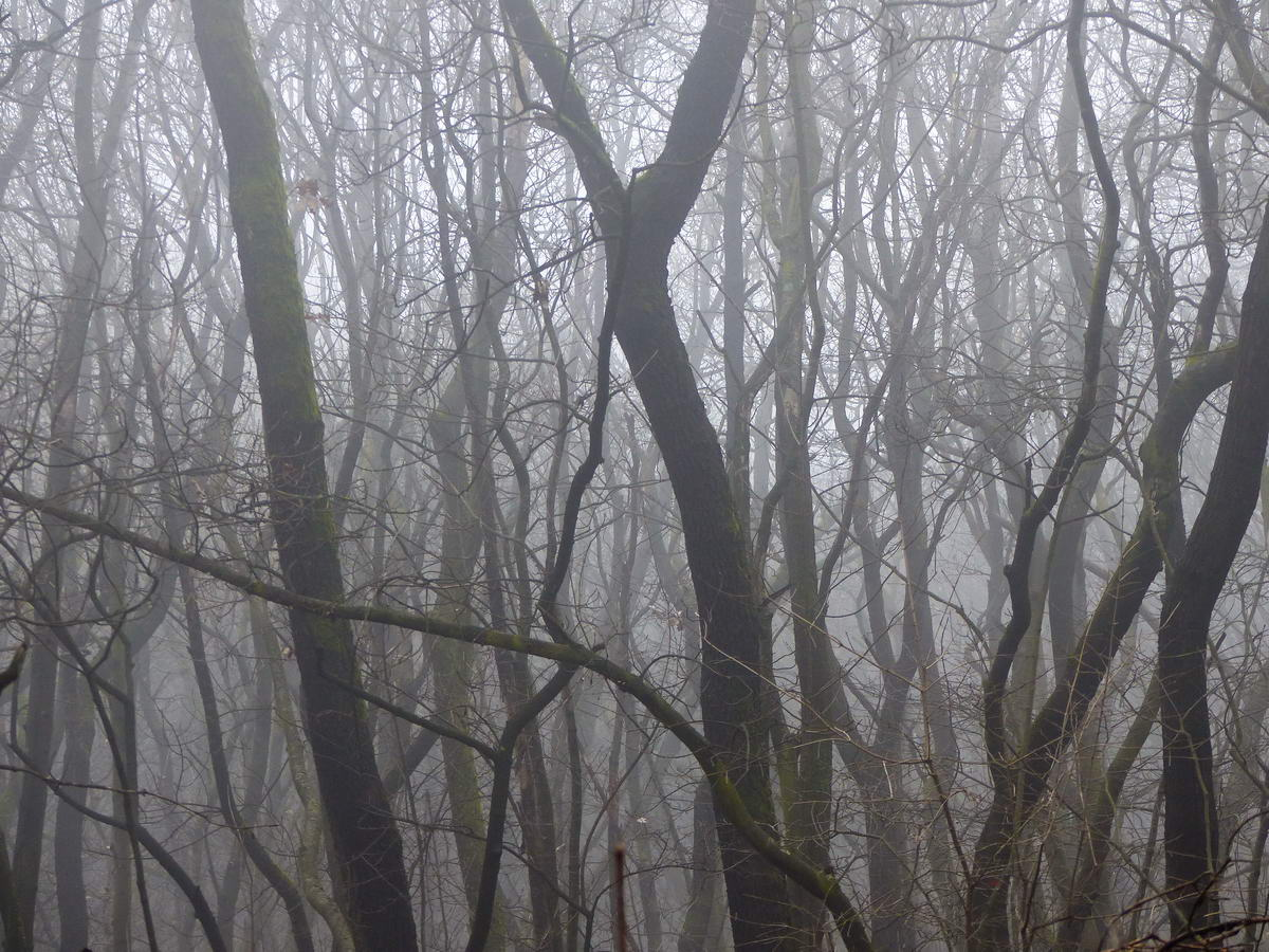 Erdő a ködben