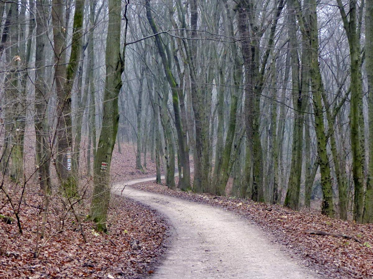 Erdőgazdasági földúton