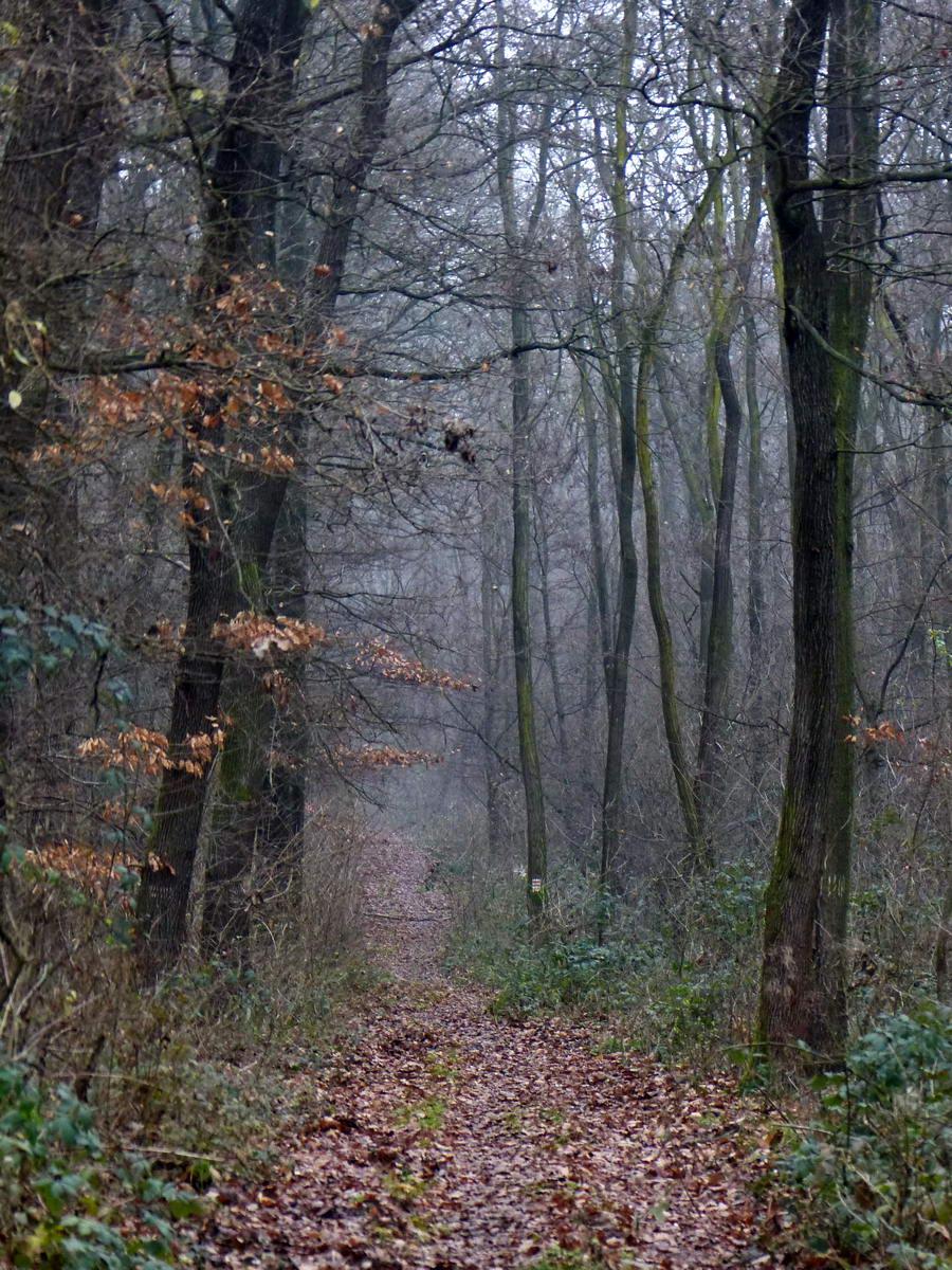 Ködös ösvényen