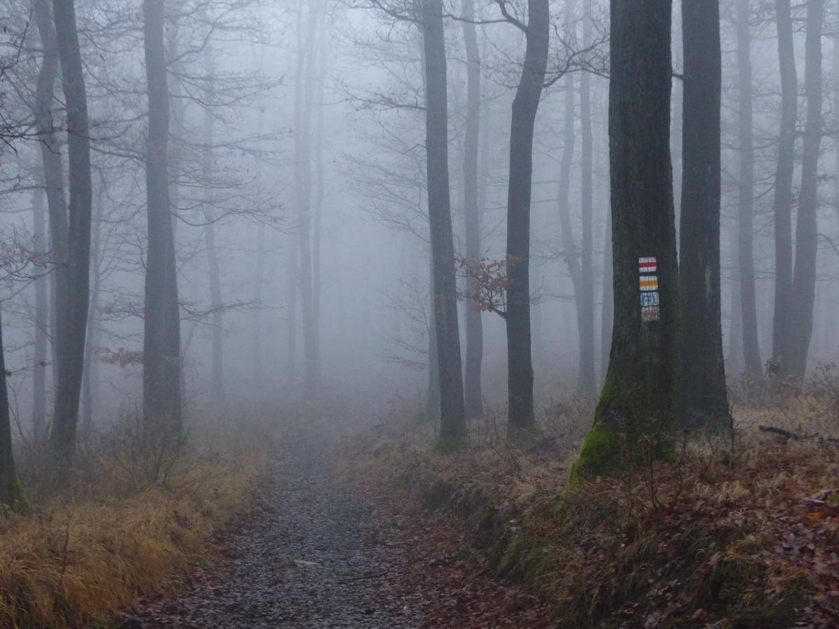 Ködös erdőben Pilisszentkereszt felett
