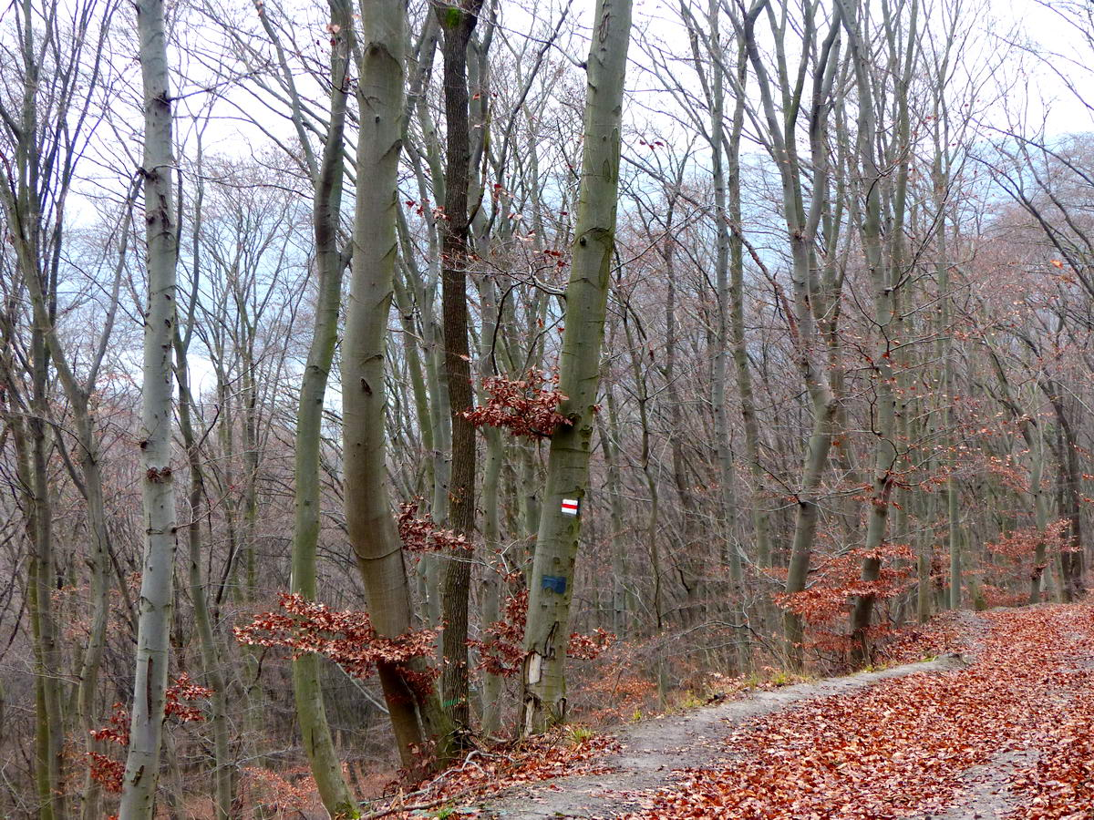 A fák között időnként feltűnt a Duna szürke szalagja