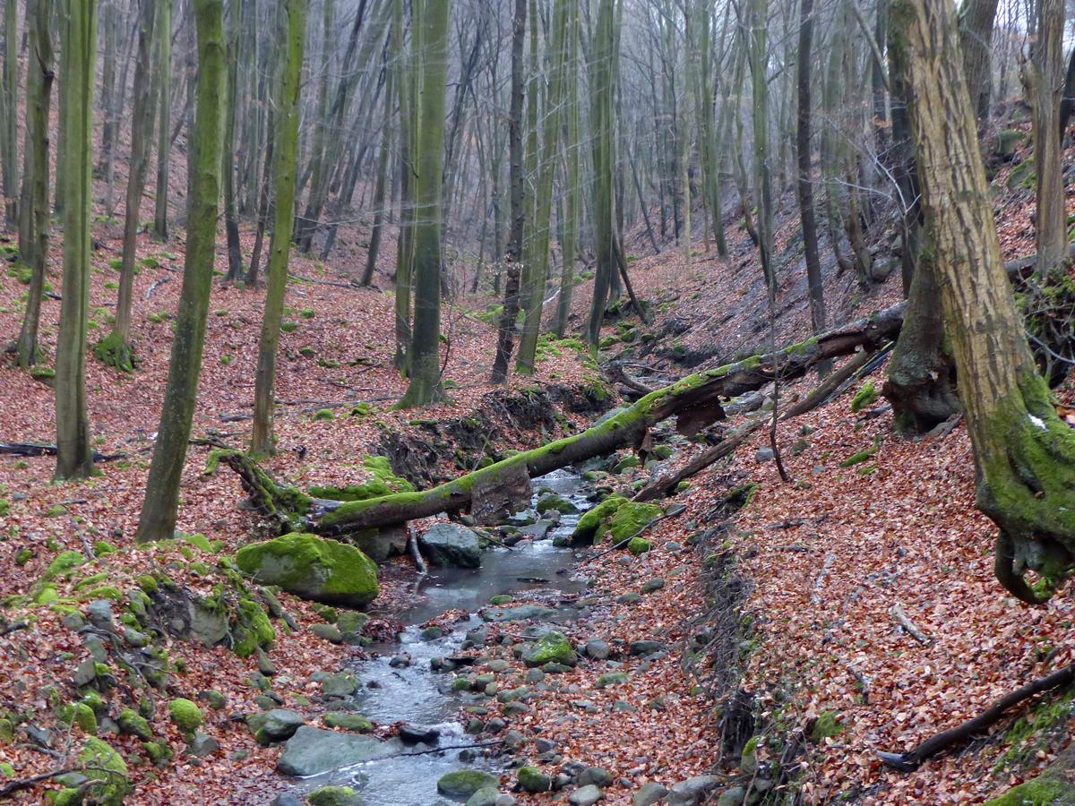 A Szőke-forrás-völgyében