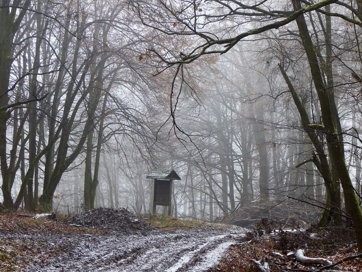 Belemerültem a vékony ködbe a Lom-hegyi-nyeregben