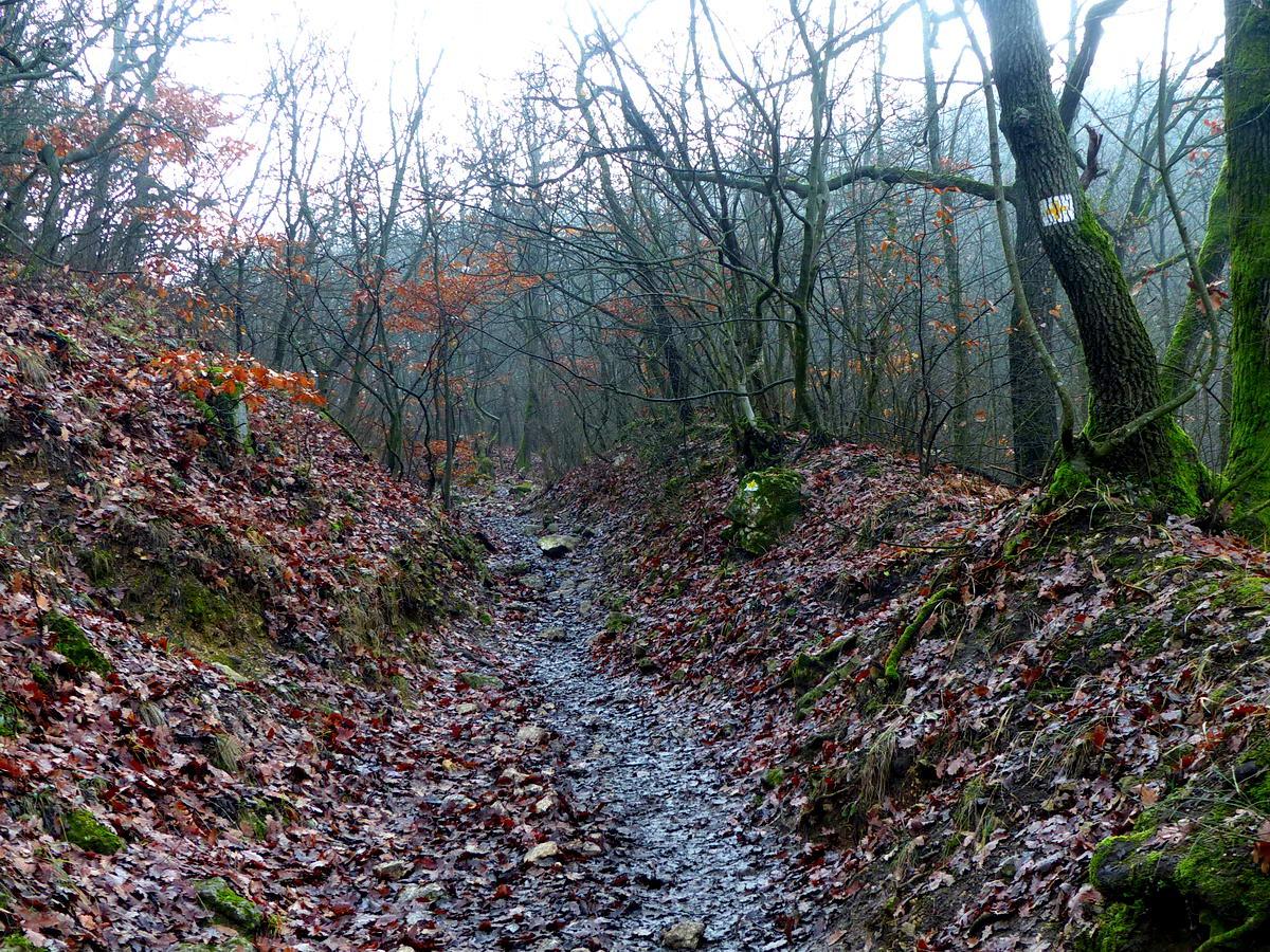 Köves kapaszkodó a sárga kereszt jelzés ösvényén az Oszolyra