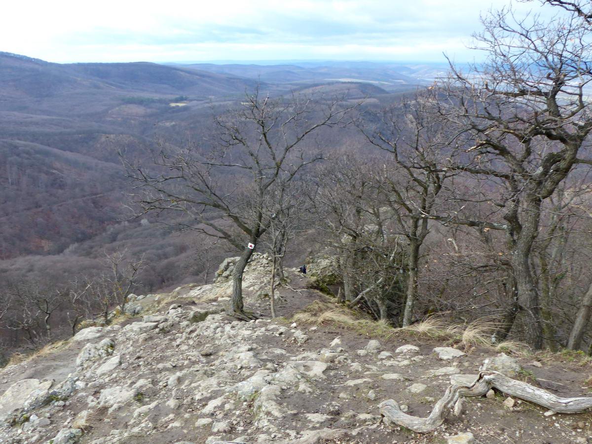 Ezeken a képeken lefelé haladtam a Vadálló-kövek gerincén. A csúcs alatti erdőből kibukkanva feltűnik előttünk az éles gerinc.