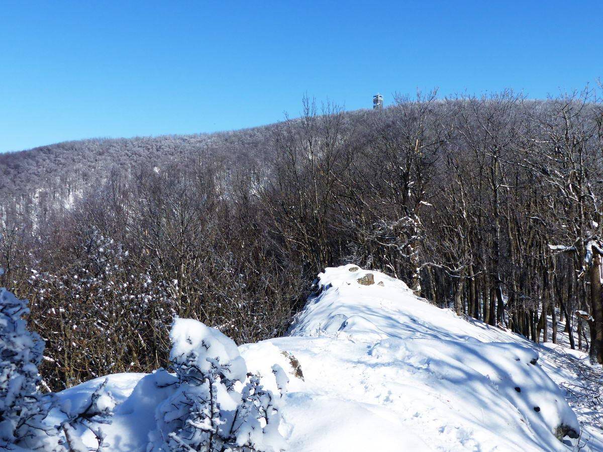 Visszatekintés a Szabó-kövek kopasz gerincéről a Csóványos tetején álló kilátóra. Jó nagyot ereszkedtem onnan, de meglesz még ennek a böjtje, hiszen fel kell kaptatnom a gerinc végén a Nagy-Hideg-hegyre!