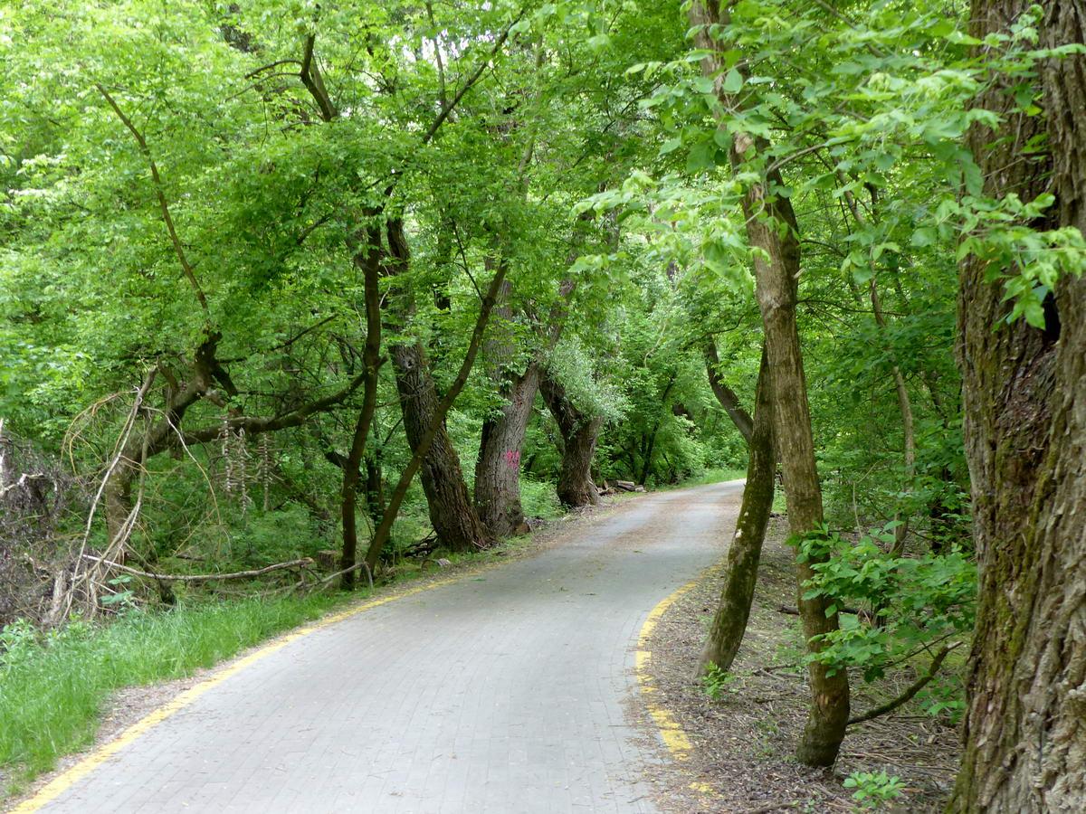 Vadregényes helyeken, az ártéri erdőben vezet kanyarogva a kerékpárút